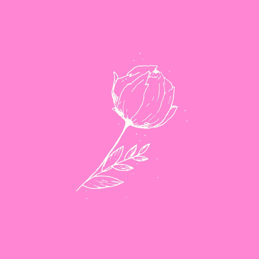 peony illustration on solid pink