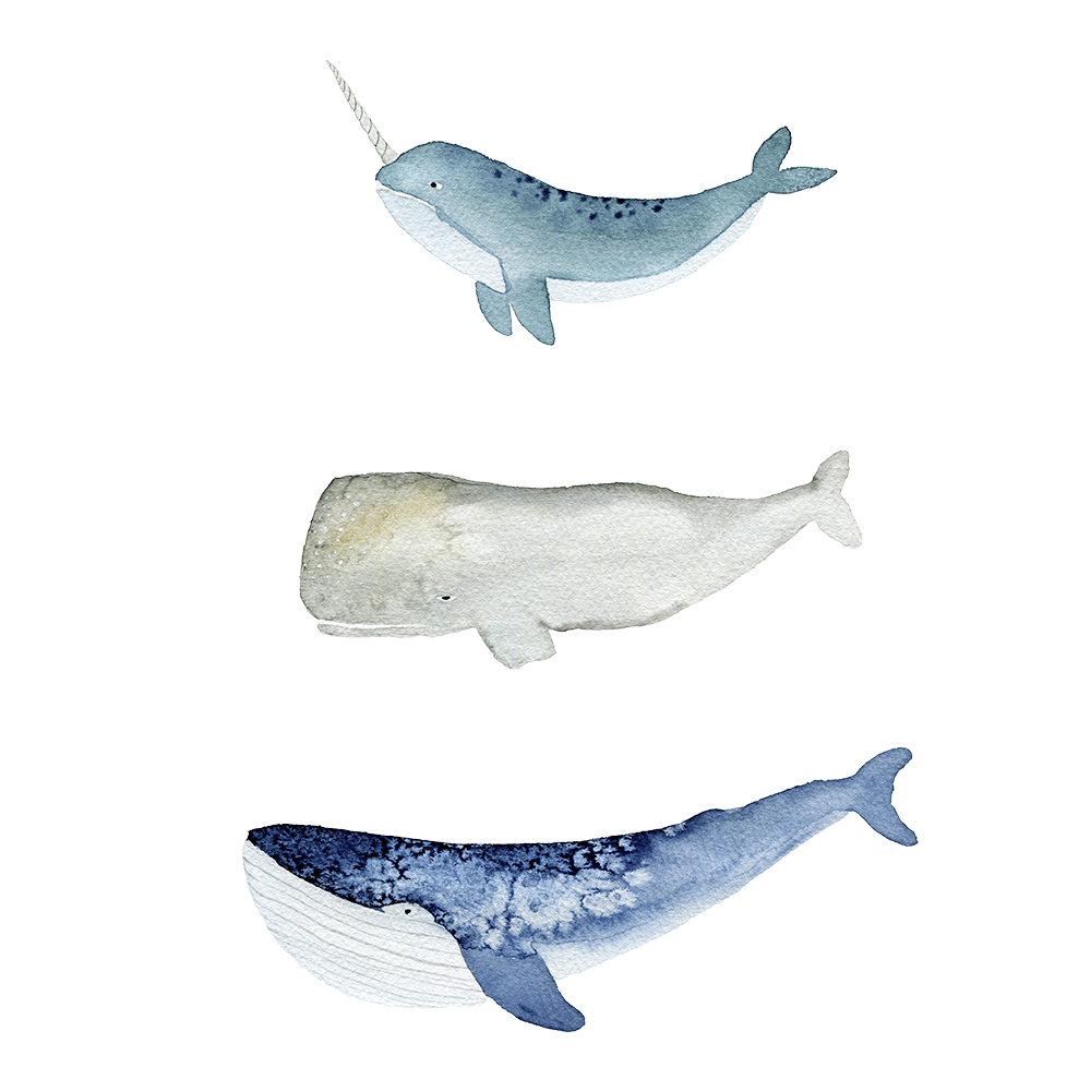 Watercolor illustration of whales