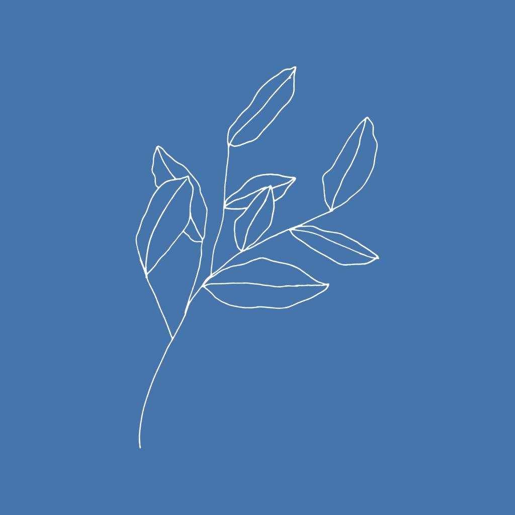White Olive twig illustration on solid blue